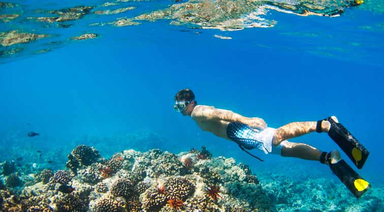 Great Things About Hawaii Snorkeling