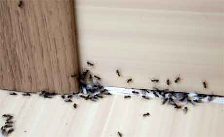 Ant Pest Control Methods